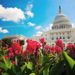 capitol building in the spring in DC